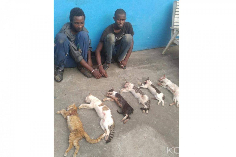 Côte d'Ivoire : À  Abobo, deux individus mis aux arrêts pour vol de chats