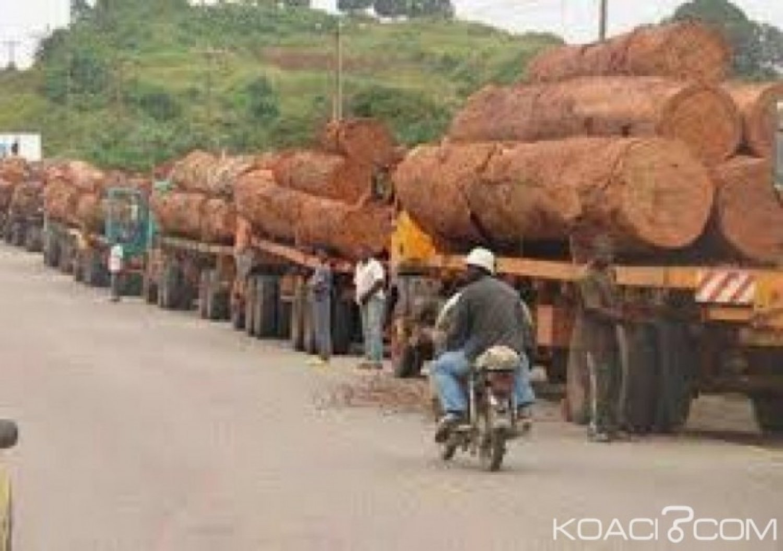 Cameroun : L'exploitation illégale du bois décriée à l'Est et au Sud du pays