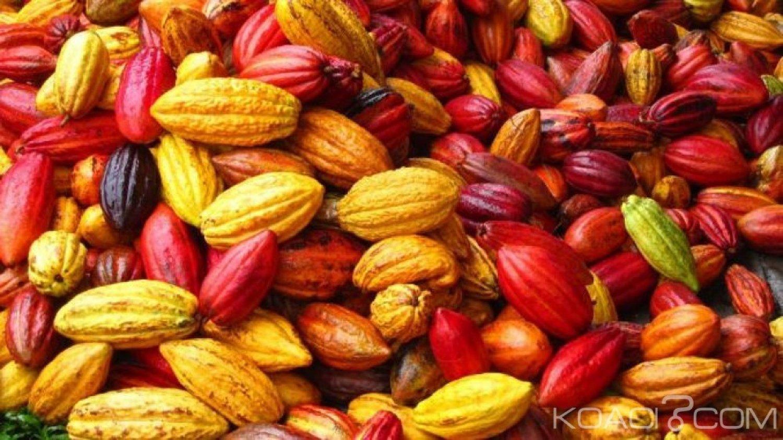 Cameroun : La Beac révèle la baisse du kg du cacao en zone Cemac