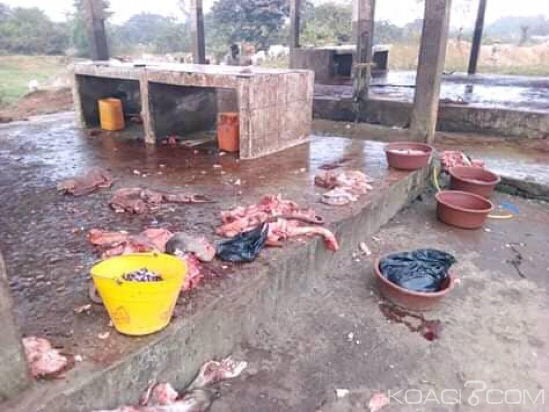 Côte d'Ivoire : Danané, en raison d'un véritable manque d'hygiène sur le lieu,   le préfet suspend les activités à l'abattoir