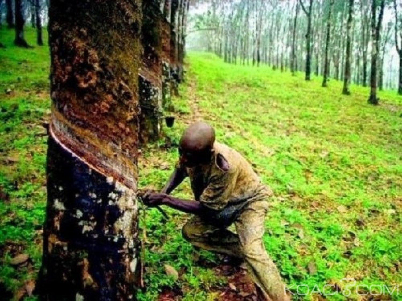 Cameroun : Greenpeace Afrique, « le retrait de financement au géant du caoutchouc,   est une bonne nouvelle »