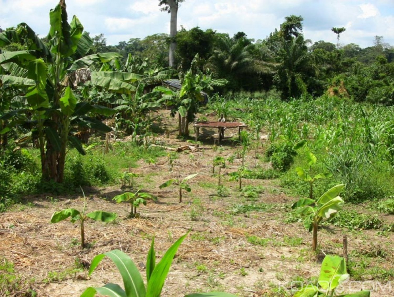 Côte d'Ivoire : Worodougou, découverte macabre des corps de deux   femmes et bébés dans un champ