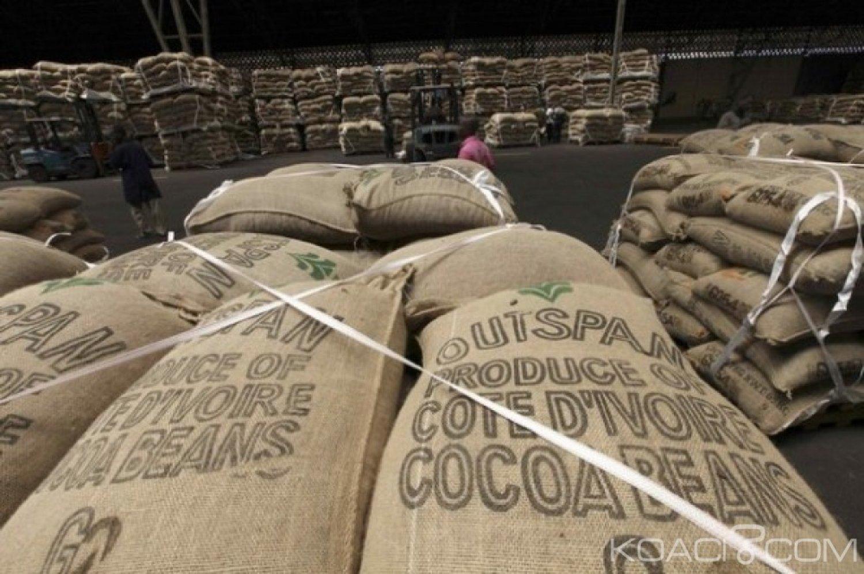 Côte d'Ivoire : Cacao, le prix bord champ du kilogramme de cacao pour la campagne commerciale intermédiaire rendu public vendredi