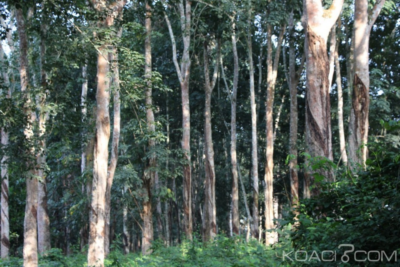 Côte d'Ivoire : L'Apromac revendique 650 000 hectares de superficie d'hévéa en 2018