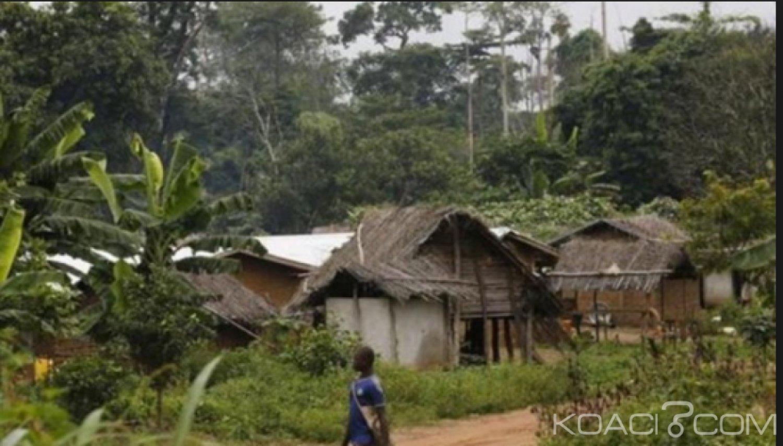 Côte d'Ivoire : Les occupants d'une forêt classée à l'ouest menacés de déguerpissement
