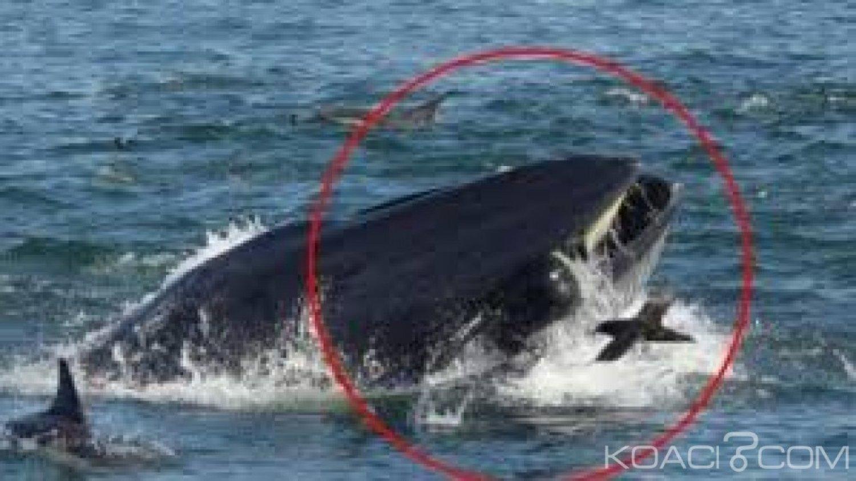 Afrique du Sud : Un plongeur avalé puis recraché vivant par une baleine