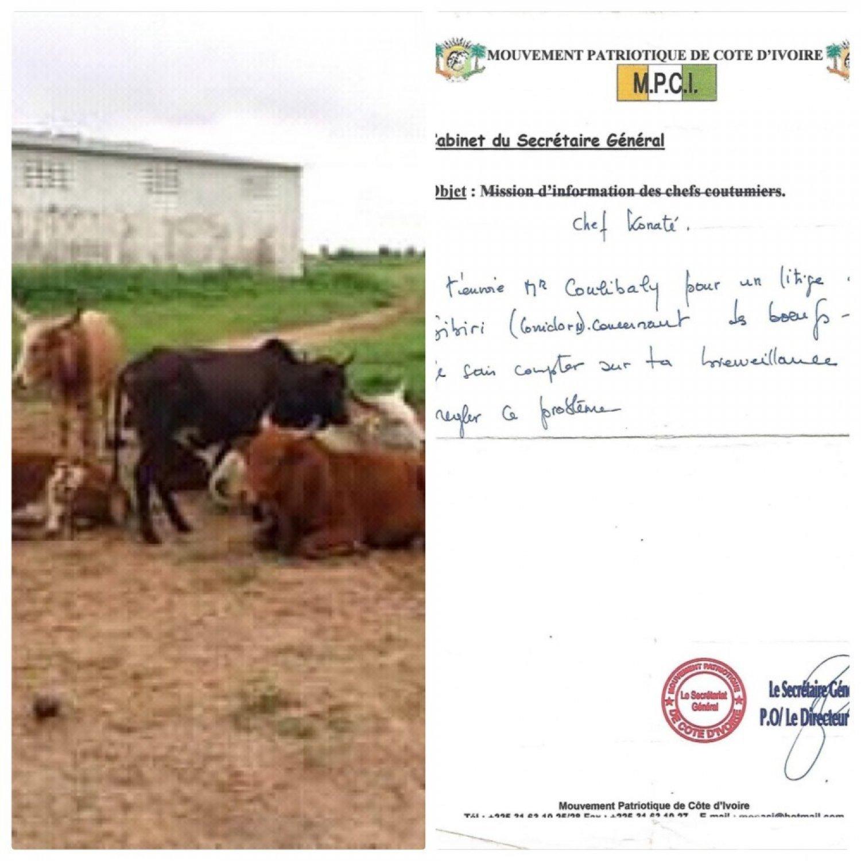 Côte d'Ivoire : Bouaké, suite à l'expropriation de son troupeau de bœufs durant la rébellion,  un chômeur interpelle des ministres et cadres des ex FAFN au pouvoir