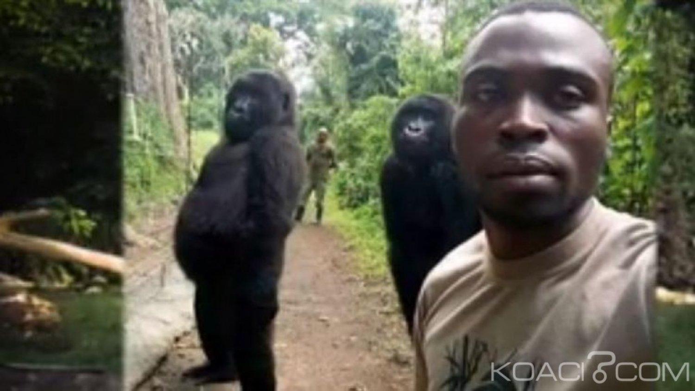 RDC: Un éco-garde tué  par des pygmées après le succès du selfie avec des gorilles