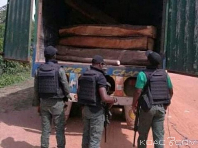 Côte d'Ivoire : Après la mise en garde du premier ministre, 2 trafiquants de bois de vène condamnés à 2 ans de prison