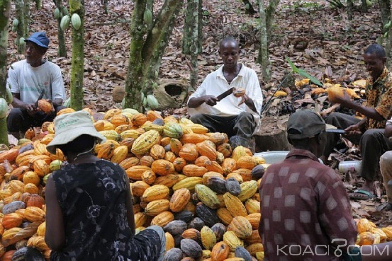 Côte d'Ivoire : Contrairement aux informations rapportées sur le terrain,  le recensement des producteurs  n'a nullement l'objectif de faire payer des impôts