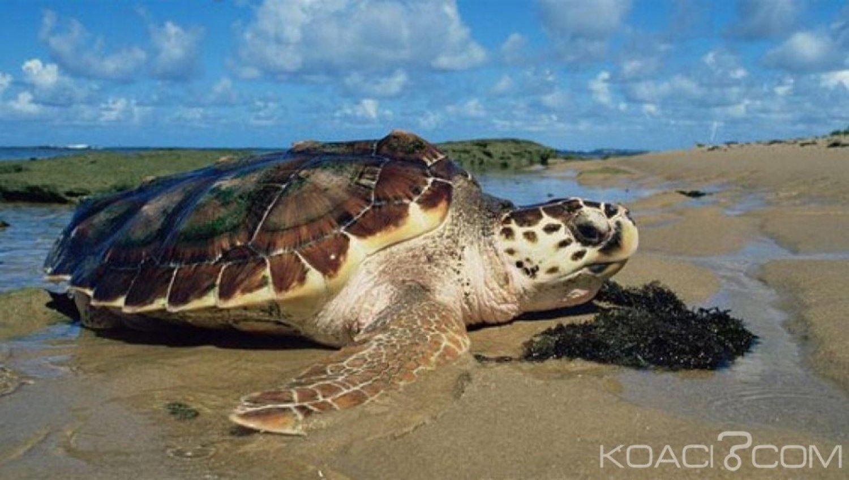 Madagascar: Quatre personnes meurent après avoir mangé la viande de tortue de mer