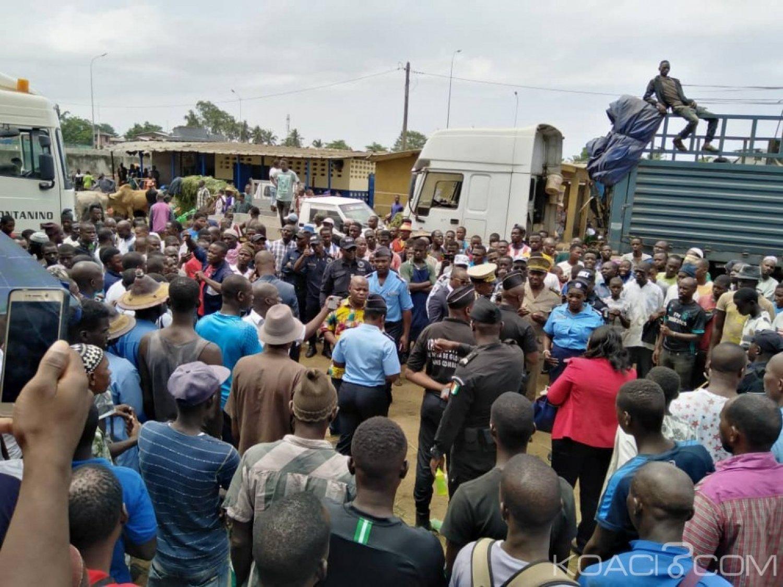 Côte d'Ivoire : Les acteurs de la filière bétail en grève, ils dénoncent la tarification par tête de bête dans le nouvel abattoir