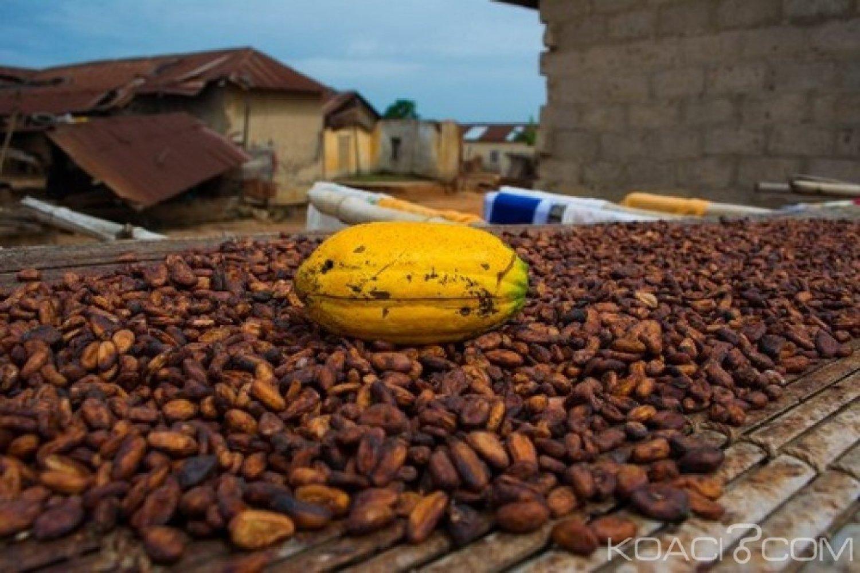 Ghana Côte-d'Ivoire : Suspension de la vente de fèves de cacao