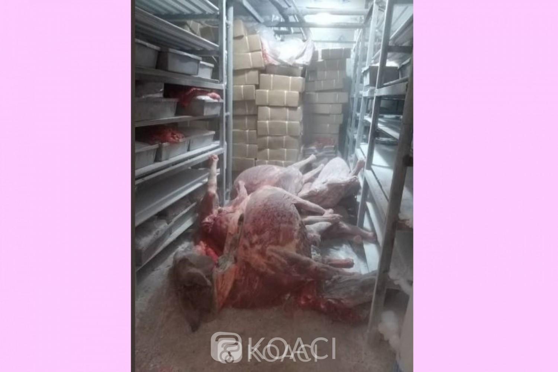 Côte d'Ivoire: Des asiatiques tenaient un abattoir clandestin à Ouangolodougou