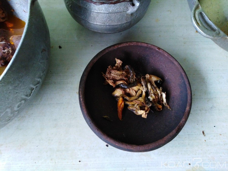 Côte d'Ivoire: La soupe de grenouille, nouveau plat prisé à Abidjan