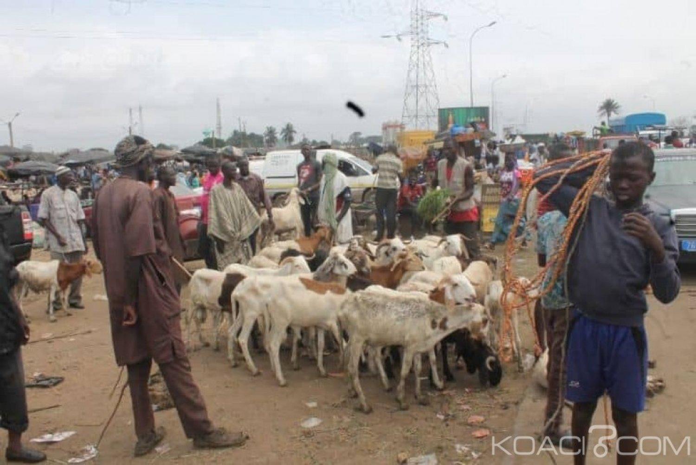 Côte d'Ivoire : A quelques semaines de la fête de la Tabaski, des voleurs de moutons arrêtés à l'abattoir de Port-Bouët