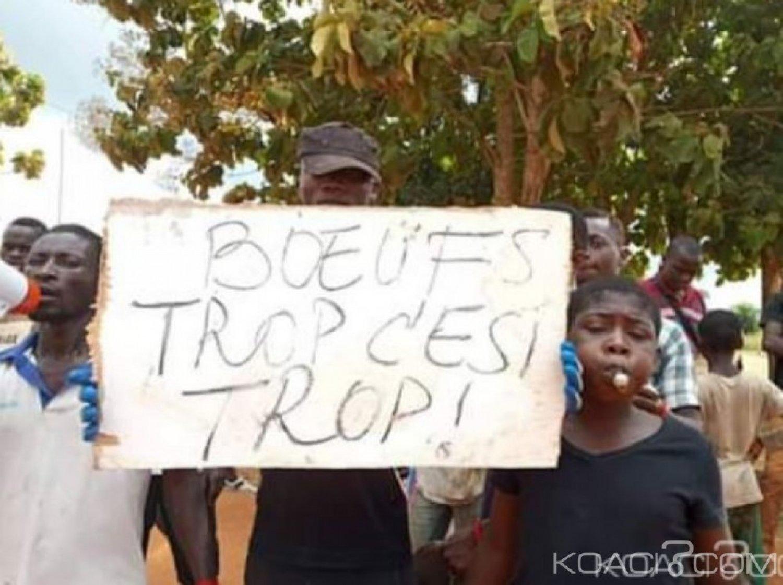 Côte d'Ivoire : Guitry, suite à la bastonnade infligée à un chef par des bouviers,  des jeunes en colère, descendent dans la rue