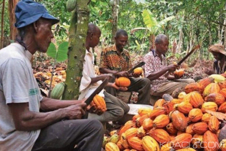 Côte d'Ivoire : Cacao, bien comprendre le mécanisme de compensation pour les producteurs à défaut du prix plancher