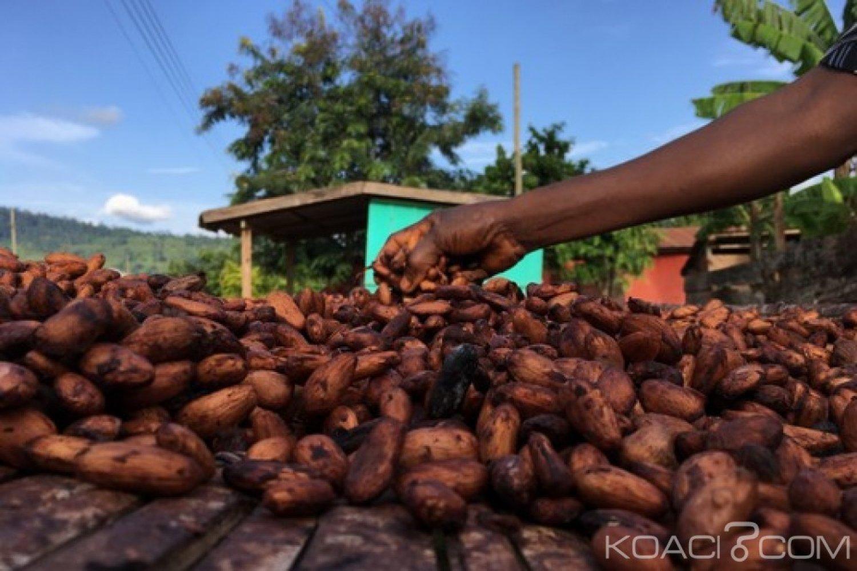 Ghana Côte-d'Ivoire : Les acheteurs du cacao à rencontrer à nouveau en septembre à Abidjan