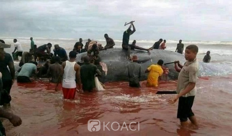 Nigeria: Etat de Bayelsa, risque d'épidémie pour cause d'une baleine dévorée