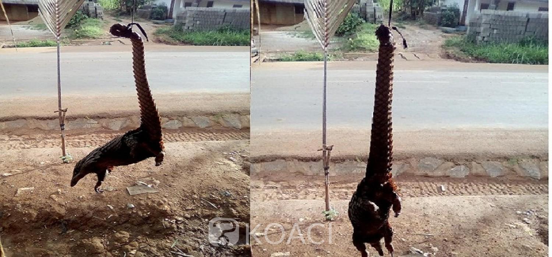 Cameroun: Espèce protégée et menacée, le pangolin se vend librement dans les marchés