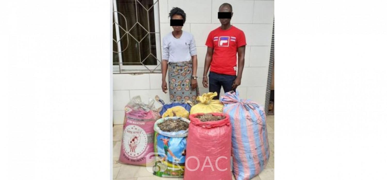 Côte d'Ivoire : Près de 150 kg d'écailles de pangolin saisis auprès d'un collaborateur du ministère des ressources animales et halieutiques