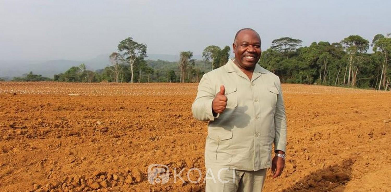 Gabon: Lancé en fanfare par Bongo en 2014, le projet graine passe de l'espoir au champ de ruine