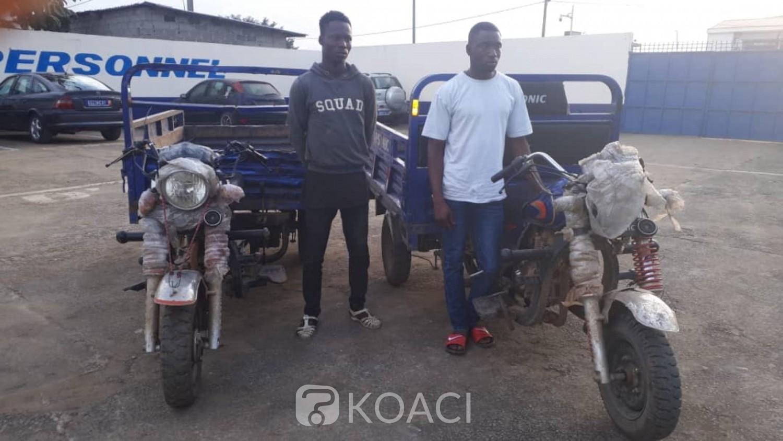 Côte d'Ivoire: Des pilleurs d'une exploitation agricole interpellés par la police