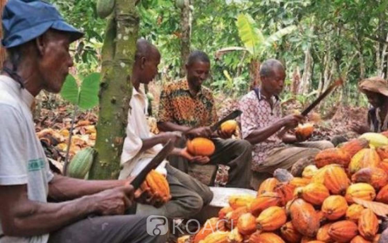 Côte d'Ivoire: Le prix d'achat du cacao bord champ annoncé mardi, les producteurs retiennent leur souffle