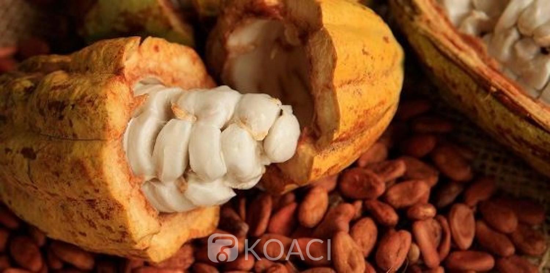 Côte d'Ivoire: Le prix d'achat  du cacao bord champ fixé à 825 FCFA le Kilogramme