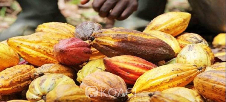 Côte d'Ivoire-Ghana: Prix du cacao, Abidjan et Accra menacent de  nouveau les chocolatiers