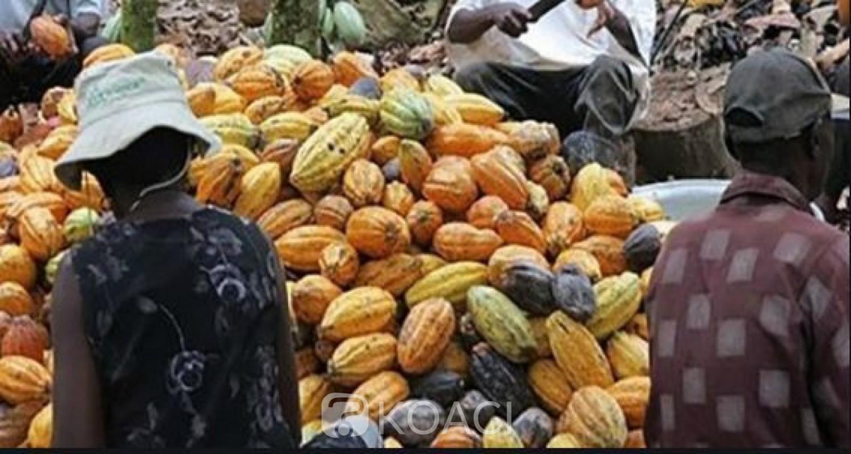 Côte d'Ivoire: Enième réunion sur le Cacao à Berlin, que peuvent espérer les producteurs qui n'y sont pas  associés ?