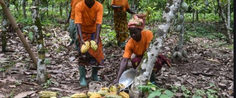 Côte d'Ivoire-Ghana: Importante victoire d'Abidjan et Accra à Berlin pour l'amélioration du prix du cacao