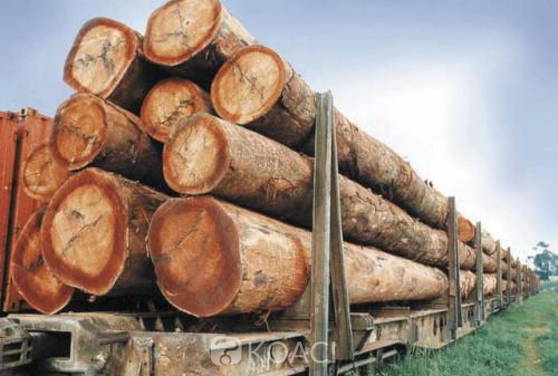 Cameroun: Pillage du bois camerounais par la Chine, un expert du CED dévoile l'incompétence du gouvernement