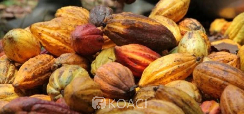 Côte d'Ivoire: Le prix du cacao reste inchangé à 825 FCFA contrairement aux informations relayées