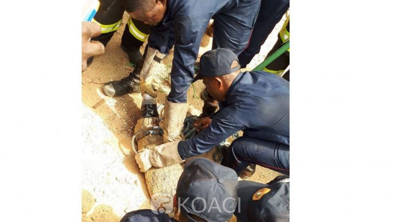 Côte d'Ivoire: Au Plateau, un saurien capturé et conduit au zoo d'Abidjan