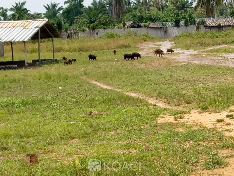 Côte d'Ivoire : Jacqueville,  le village d'Adoukro au centre d'un litige foncier, les populations invitent les opérateurs à prendre leurs dispositions pour ne pas se faire gruger par des propriétaires