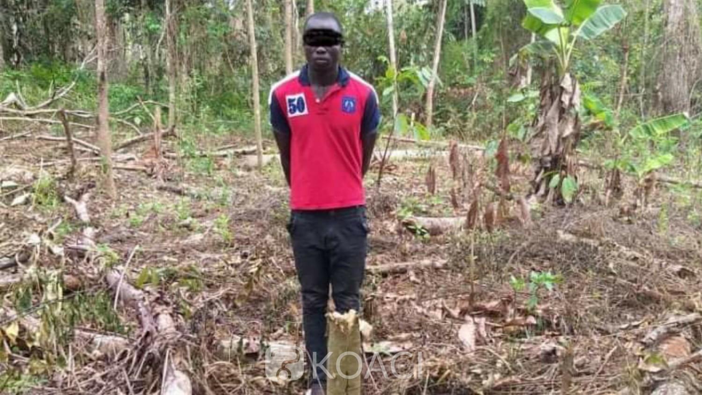 Côte d'Ivoire :  Forêt classée de Cavally, deux clandestins condamnés par le Tribunal de Guiglo à des peines allant de 3 mois à 4ans et à des amendes comprises entre 100000 et 10 millions de FCFA