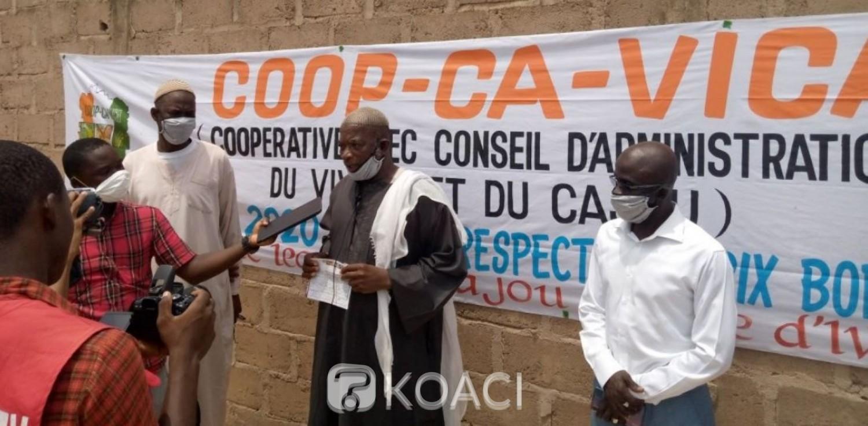 Côte d'Ivoire : Profitant de l'avènement du Coronavirus, le prix bord champ du cajou bradé par des acheteurs