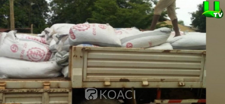 Ghana-Togo :  Saisie de 79 sacs de fèves de cacao en contrebande vers le Togo