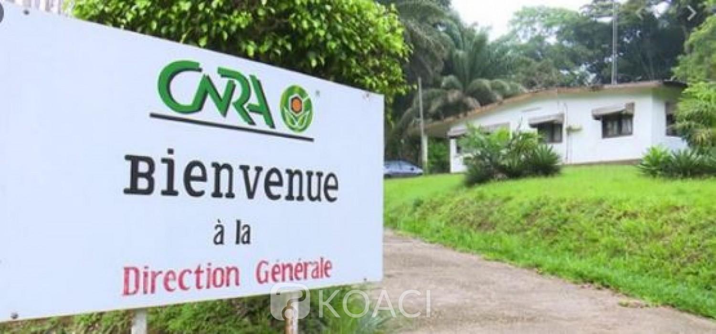Côte d'Ivoire : Affaire Abadjin-Doumé et  CNRA : Tentative de spoliation de terres, forfaiture ou abus de pouvoir  ?