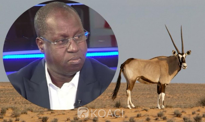 Sénégal : La mort de deux deux espèces protégées, impliquant le ministre de l'environnement, crée la polémique