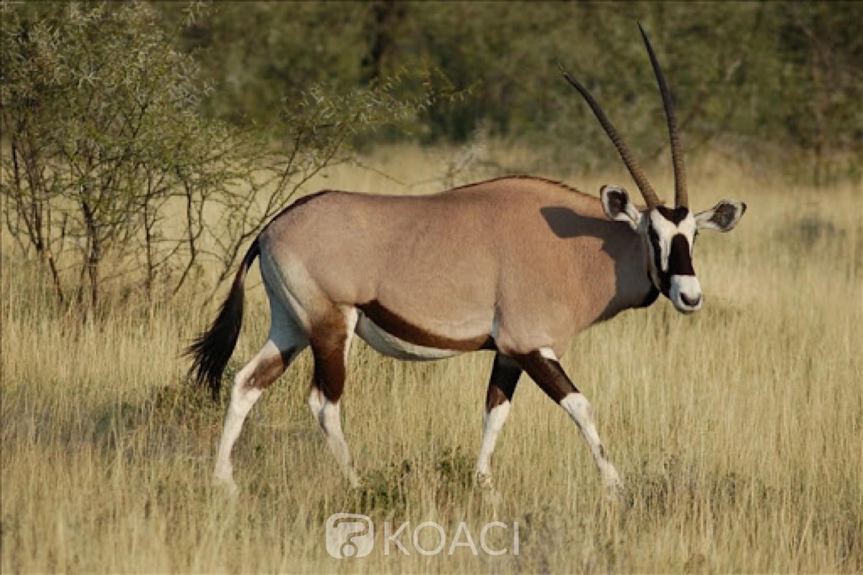 Sénégal : Affaire de la mort des gazelles oryx, le PDS traine le ministre de l'environnement devant la justice