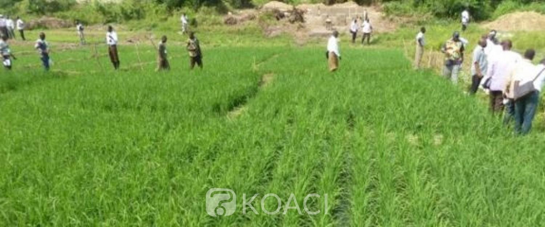 Côte d'Ivoire : Bangolo, un paysan tailladé mortellement dans un champ de riz