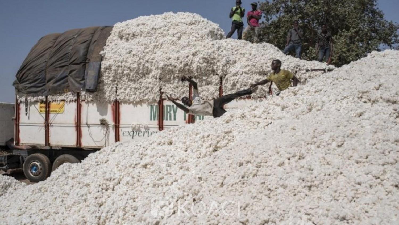 Côte d'Ivoire : Campagne commerciale 2020-2021 du coton, le gouvernement fixe le prix du kilo à 270 FCFA