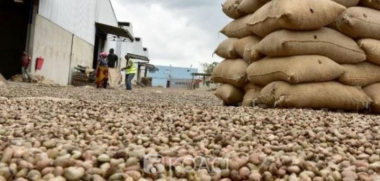 Côte d'Ivoire : Campagne commerciale d'anacarde, les producteurs en possession de 106 600 tonnes de stocks de noix de cajou brutes dans les zones de production