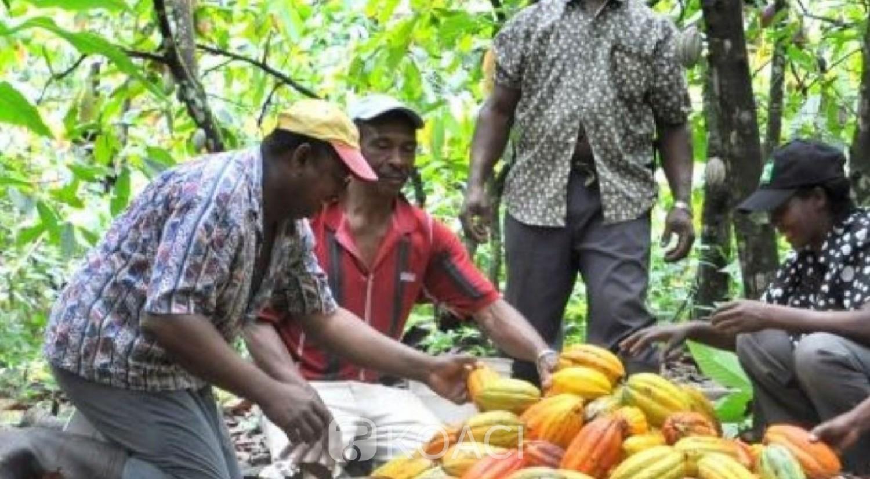 Côte d'Ivoire : En attendant la nouvelle campagne du cacao, 12 905 milliards de FCFA redistribués aux producteurs de 2012 à 2020