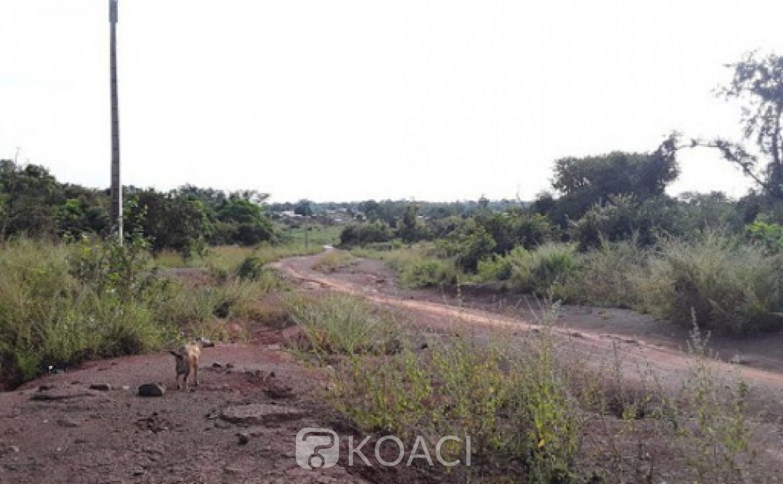 Côte d'Ivoire : À Doropo, un cultivateur ouvre le feu sur des singes et s'aperçoit qu'il a tué un jeune, il est condamné à 5 mois de prison ferme