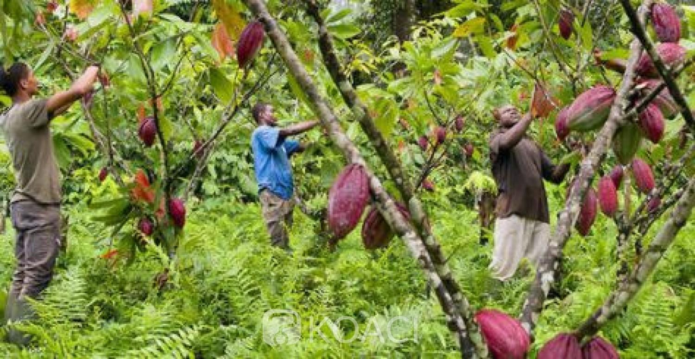 Côte d'Ivoire : « Guerre du Cacao », la pression d'Abidjan fait reculer le chocolatier  américain Hershey
