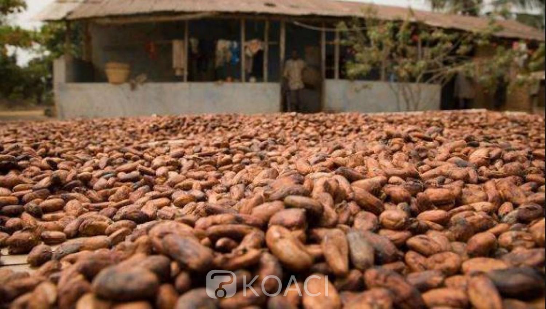 Côte d'Ivoire : « Guerre du Cacao », les dessous de la victoire d'Abidjan et Accra face aux multinationales américaines